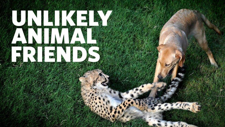Unlikely Animal Friends - Nat Geo Wild