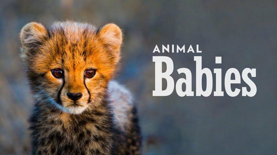 Animal Babies - BBC America