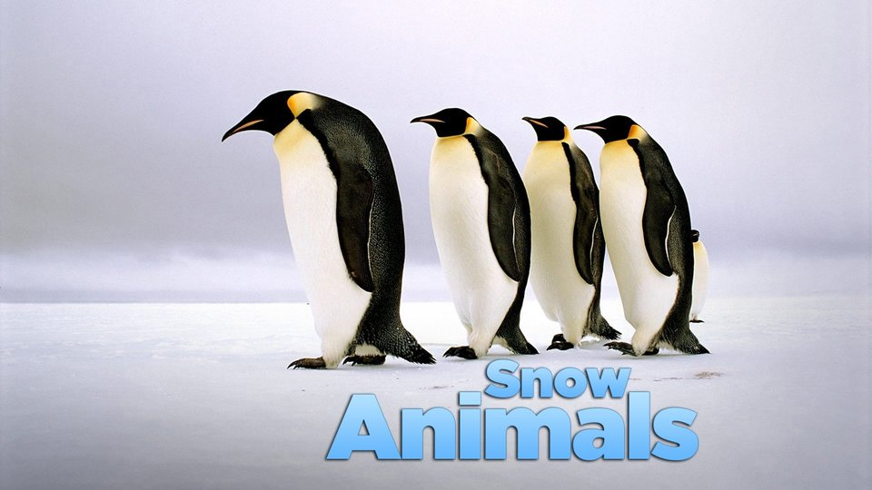 Snow Animals (BBC America)