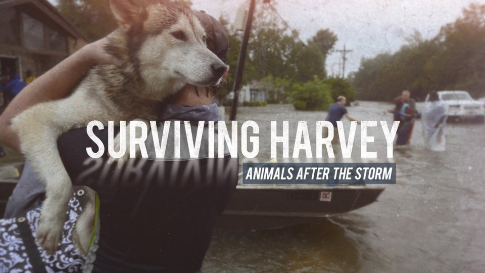 Surviving Harvey: Animals After the Storm (Animal Planet)