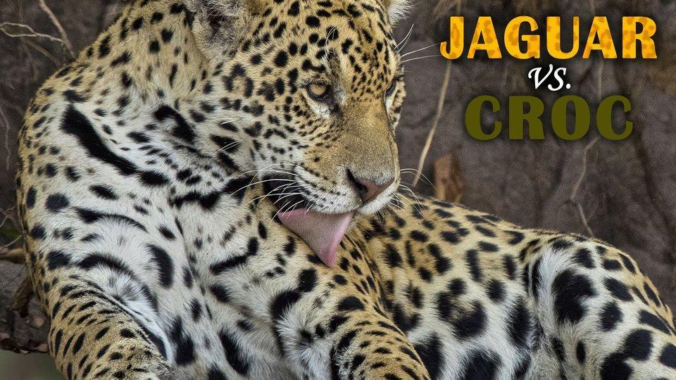 Jaguar vs. Croc - Nat Geo