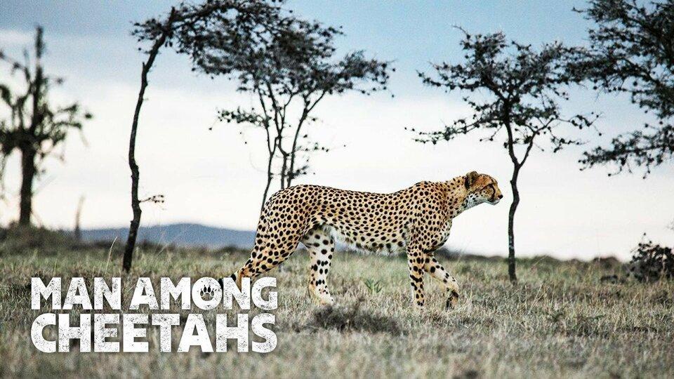 Man Among Cheetahs (Nat Geo Wild)