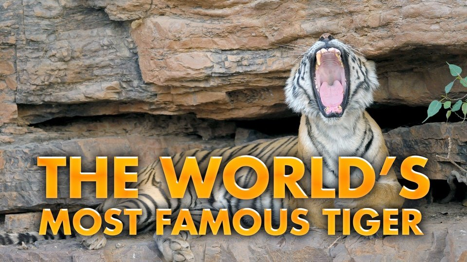 The World's Most Famous Tiger - Nat Geo Wild