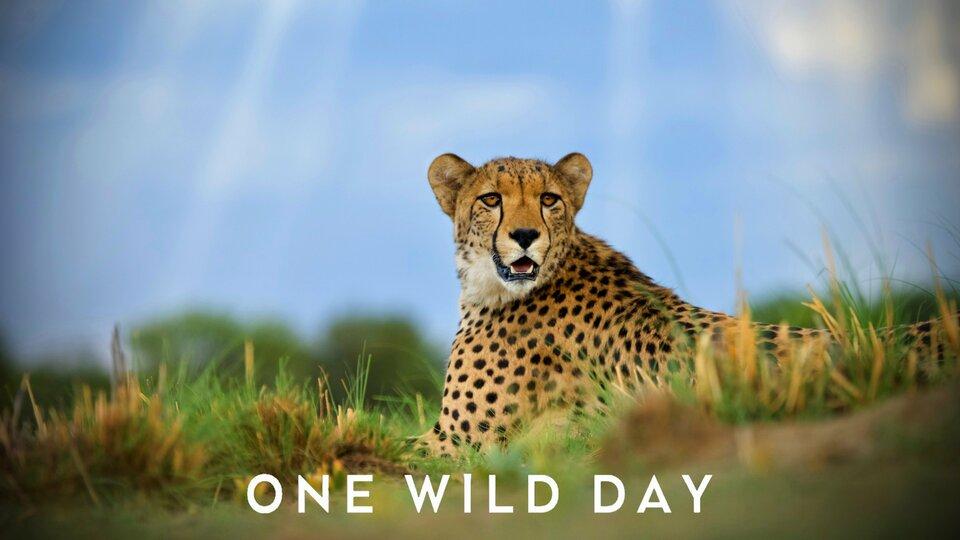One Wild Day - BBC America