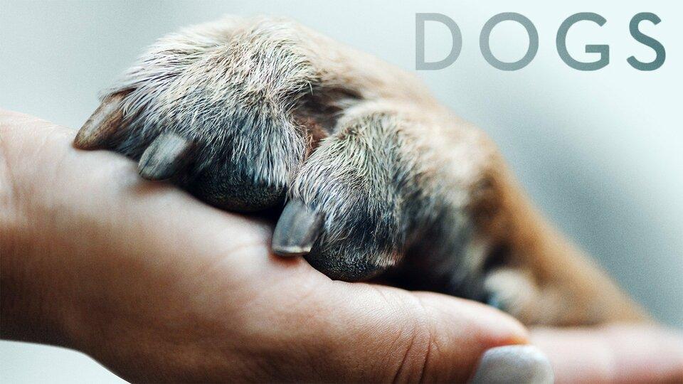 Dogs - Netflix