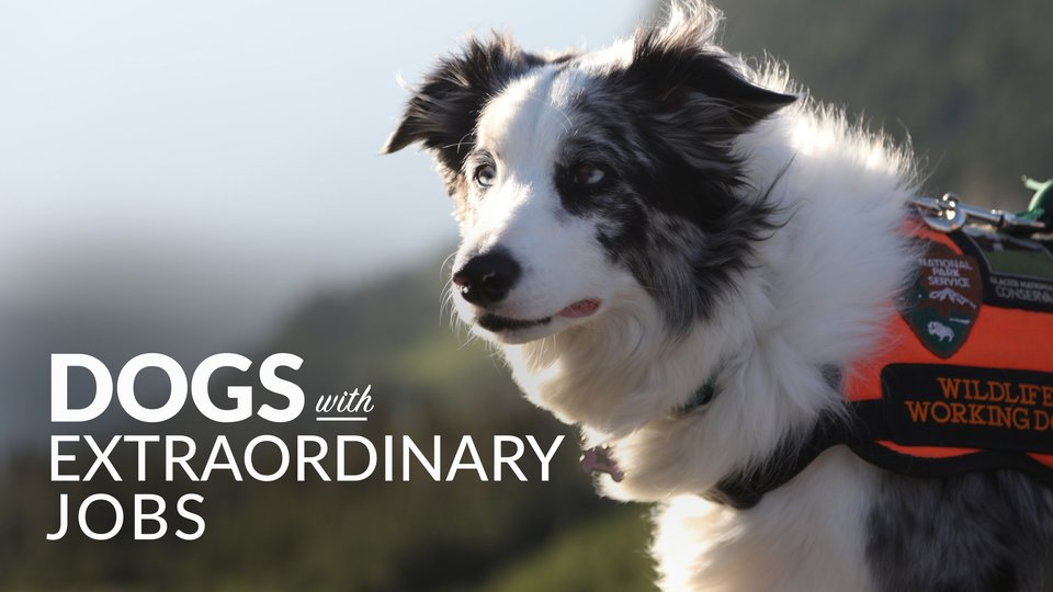Dogs with Extraordinary Jobs - Smithsonian Channel