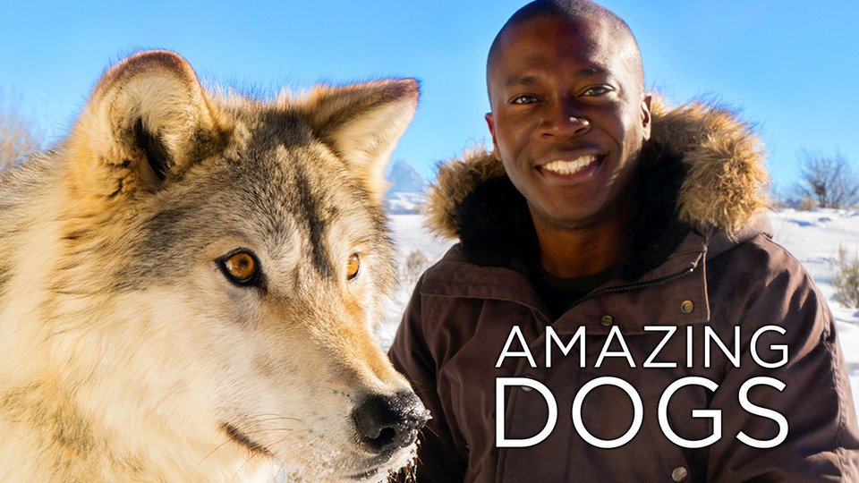 Amazing Dogs - Smithsonian Channel