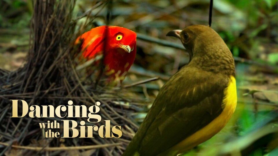 Dancing With the Birds - Netflix