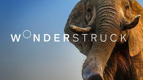Wonderstruck's Winter Wonderland - BBC America