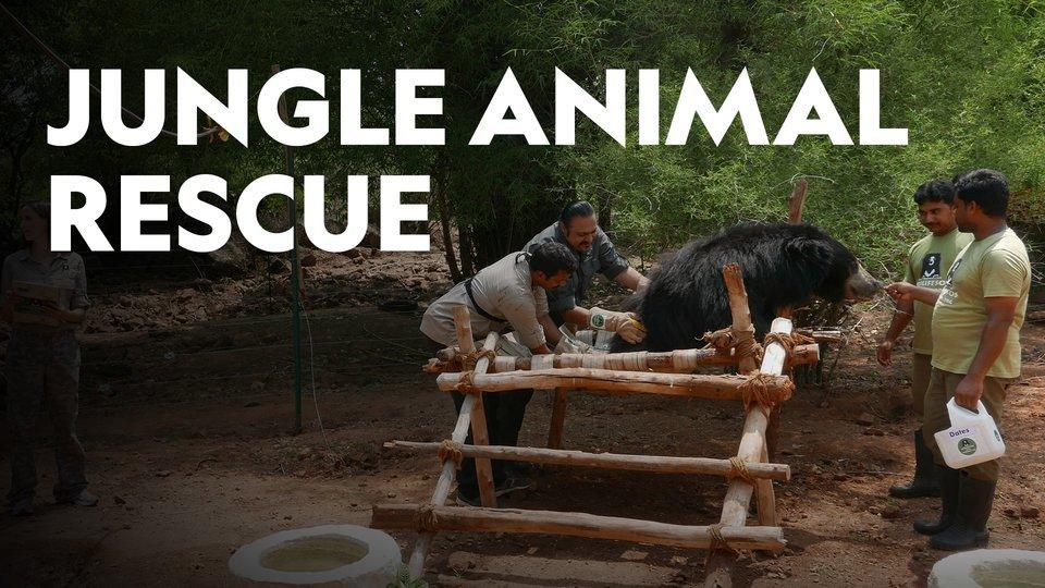 Jungle Animal Rescue - Nat Geo