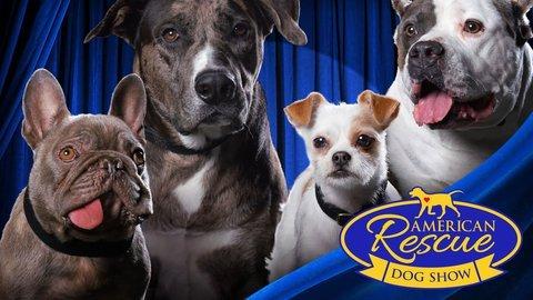 American Rescue Dog Show - Hallmark Channel