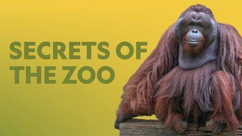 Secrets of the Zoo - Nat Geo Wild