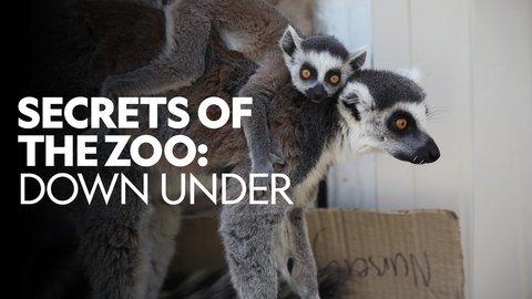 Secrets of the Zoo: Down Under (Nat Geo Wild)