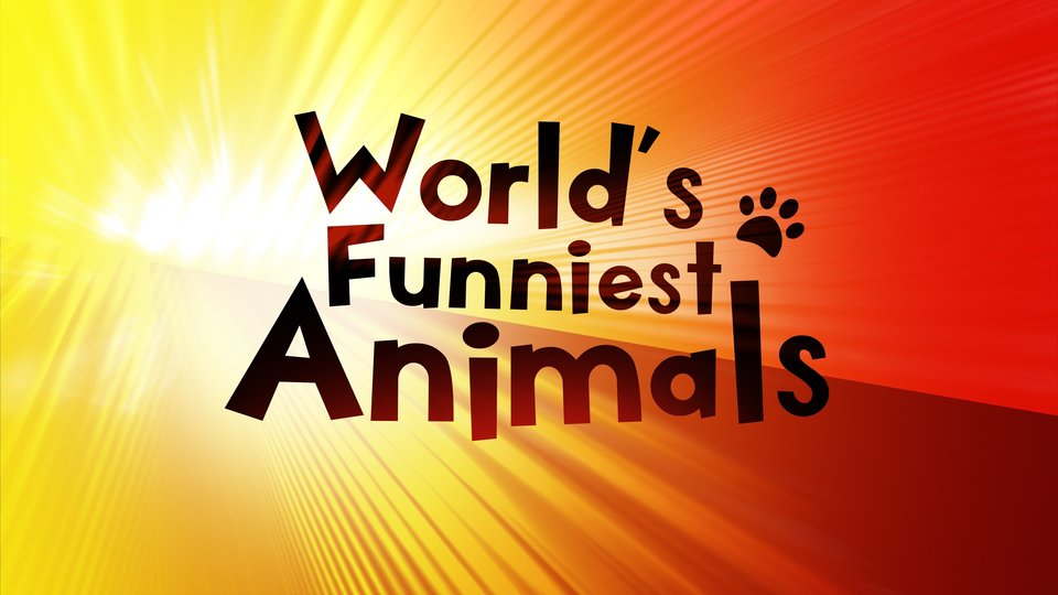 World's Funniest Animals - The CW