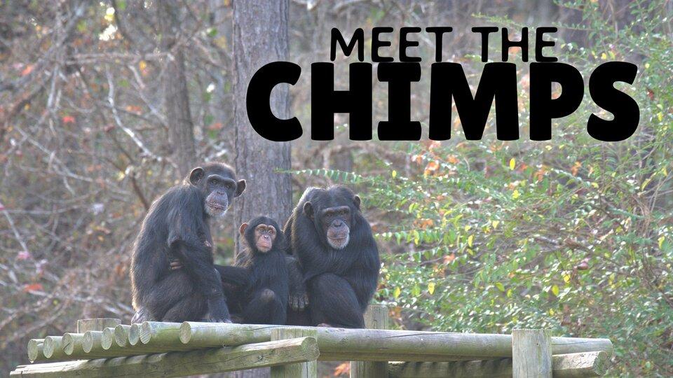 Meet the Chimps - Disney+