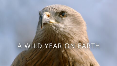 A Wild Year on Earth (BBC America)