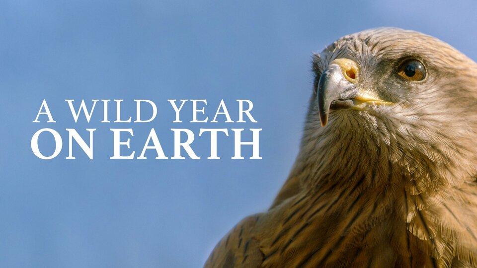 A Wild Year on Earth - BBC America