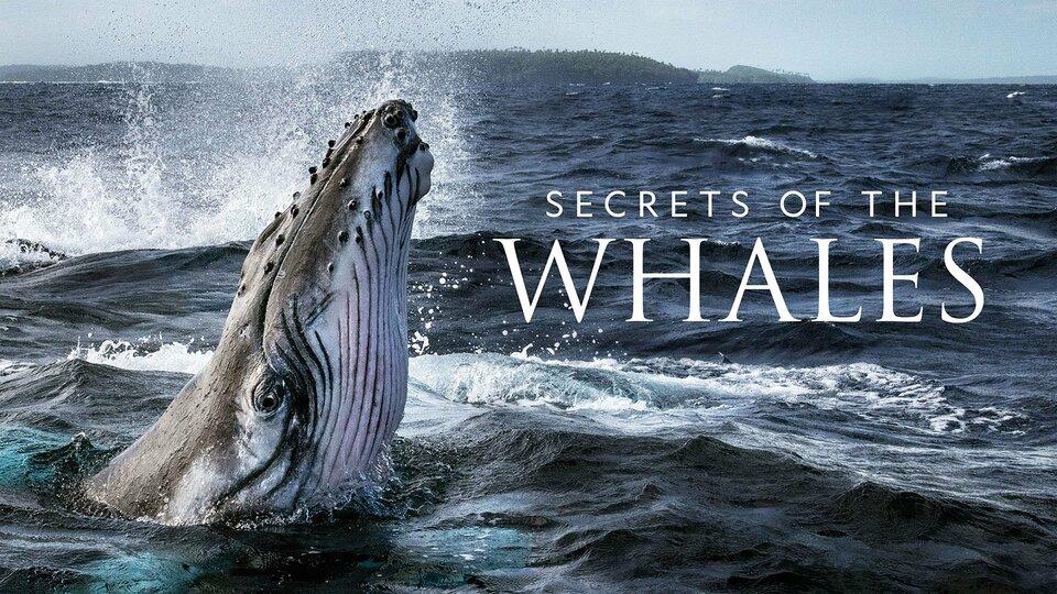 Secrets of the Whales - Disney+