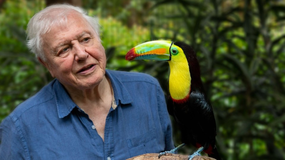 Life in Color With David Attenborough - Netflix
