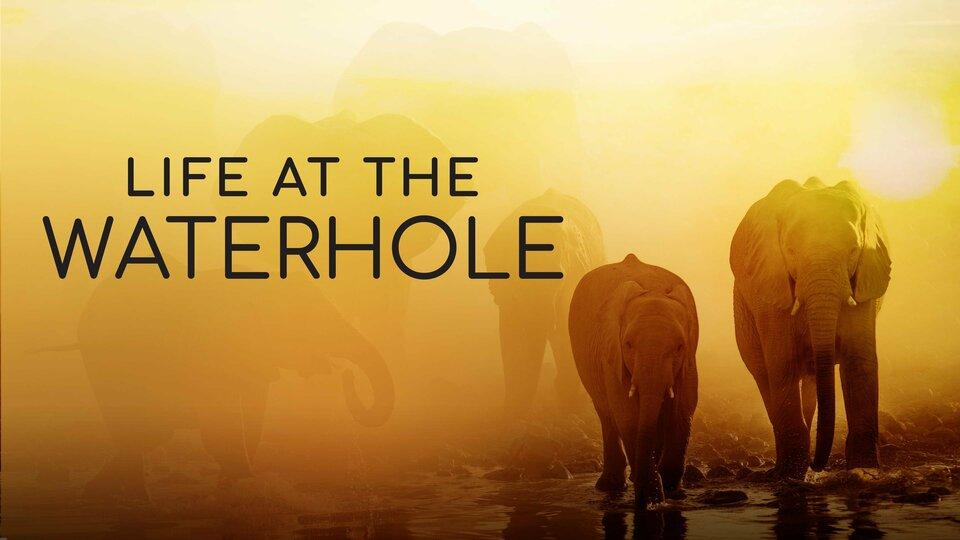 Life at the Waterhole - PBS