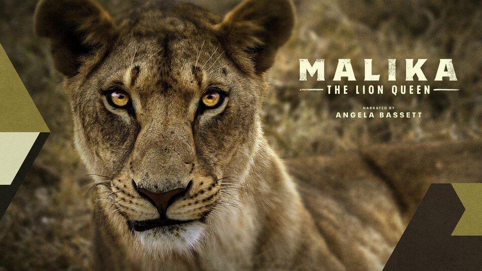 Malika the Lion Queen - FOX