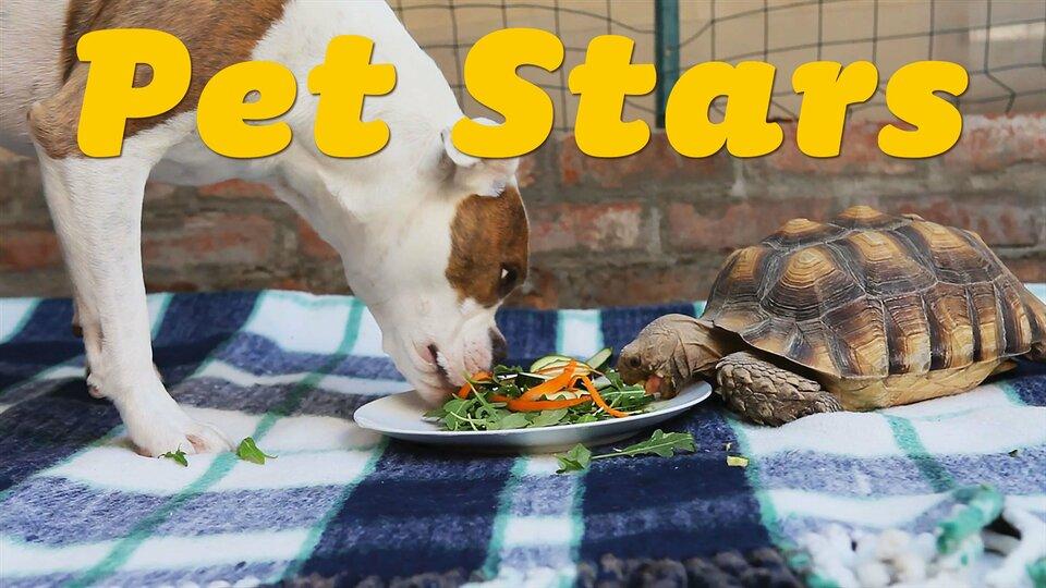 Pet Stars - Netflix