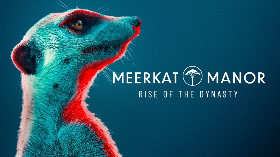 Meerkat Manor: Rise of the Dynasty - BBC America