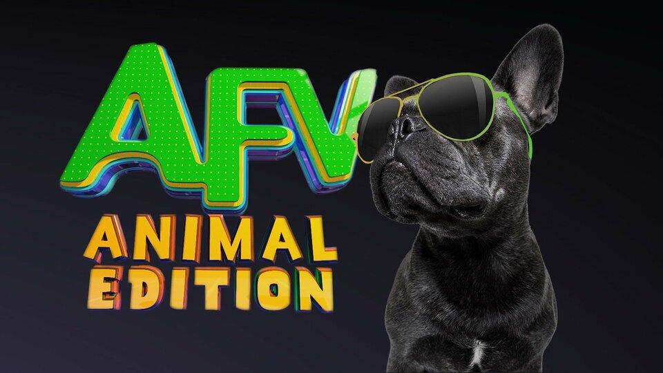 America's Funniest Home Videos: Animal Edition - Nat Geo Wild