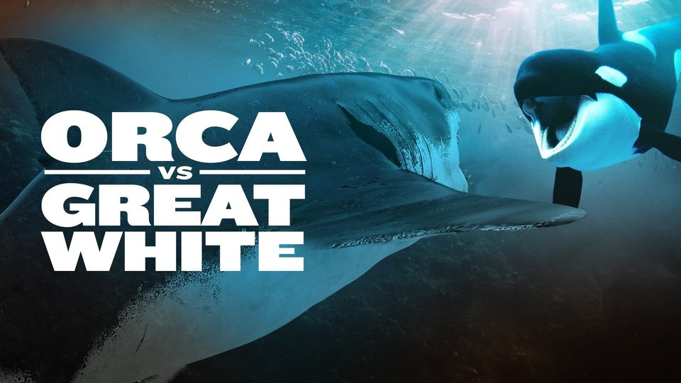 Orca vs. Great White - Nat Geo