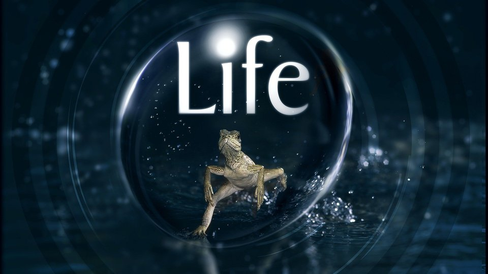 Life - Discovery Channel